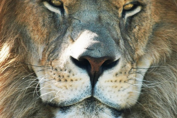 Activists condemn trophy-hunting club for 'turning wildlife into commodities'