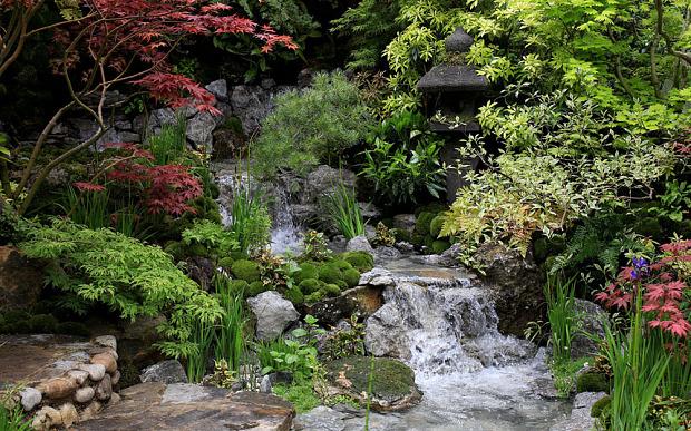 luxurious backyard tips