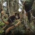 nature is speaking conservation international 2014 efforts
