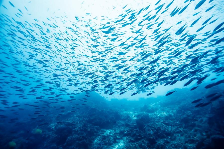 ocean fish-
