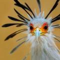 south african birds