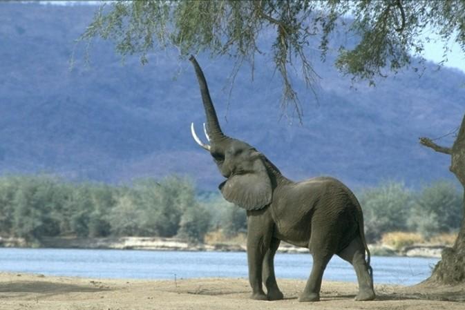 The Elephant R.U.N. at Shangri-La's Hambantota Resort & Spa: Upcycling Waste into Works of Art