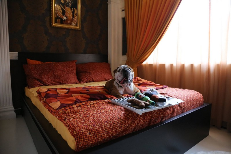 wagington singapore hotel - The Royal Suite  for Dogs