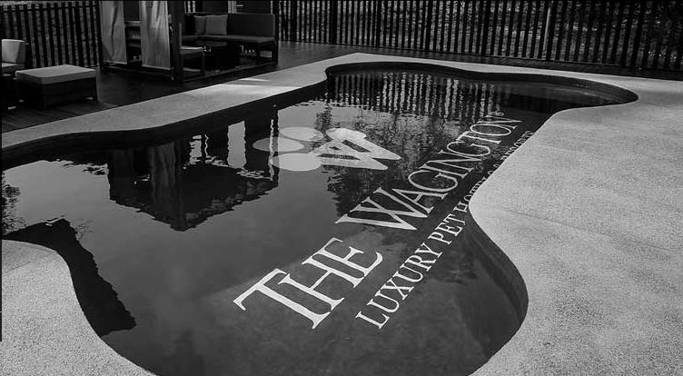 wagingtonsingapore hotel-the bone pool