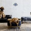 06_Lord-Lou-pet-furniture