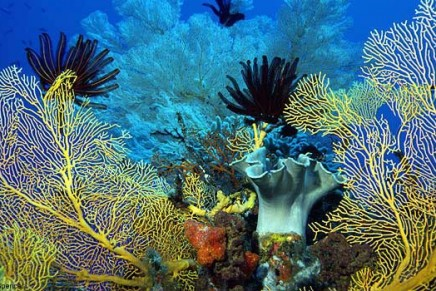 Coral Sea – The world's biggest protected marine park