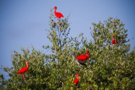 Richard Branson rebuilds Virgin Islands' native birds populations