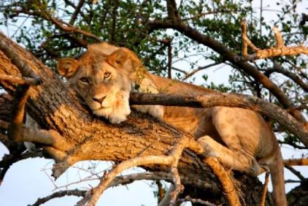 Four Seasons expands into Tanzania's Serengeti National Park