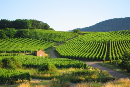 Top 10 guide to the Alsace wine route