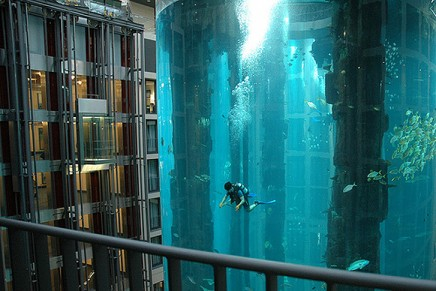 Sea life and diving without leaving the hotel