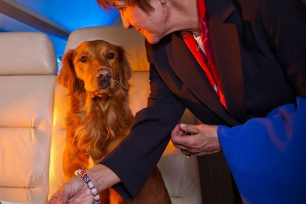 Luxury Air Traveling with pets: FURst Class Service