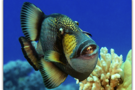 National Geographic Society, the Pristine Seas Project and Davidoff Cool Water to create the world's largest marine reserve
