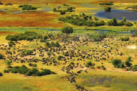A true African experience. Safari in Botswana.