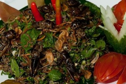 Grub's up: can insects feed the world?
