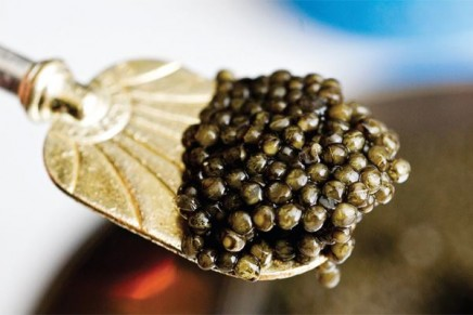 The American palate re-educated with caviar