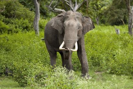 One-of-a-kind Elephants to raise awareness of the Asian elephants' dramatic plight