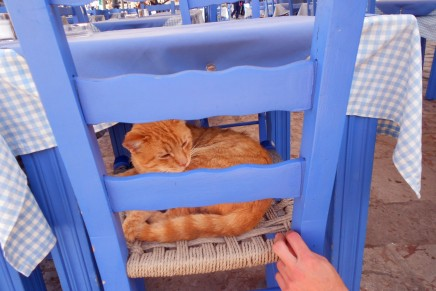 If you idolise cats: top 10 destinations for feline fanatics