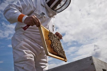 Bees under Guerlain's protection
