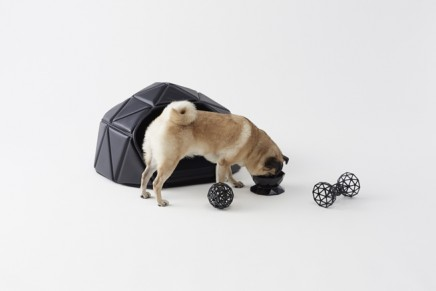 Heads or tails. Nendo accessories for the contemporary canine