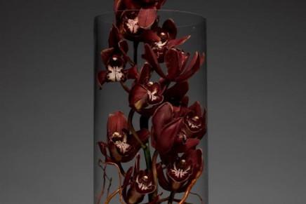 Rare blooms for spring arrangements