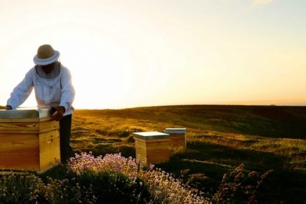 Guerlain Women for Bees – a groundbreaking female beekeeping entrepreneurship program