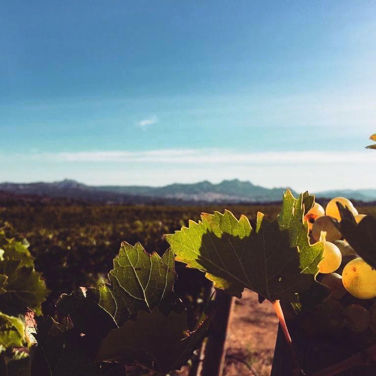 5.Wines in sardinia