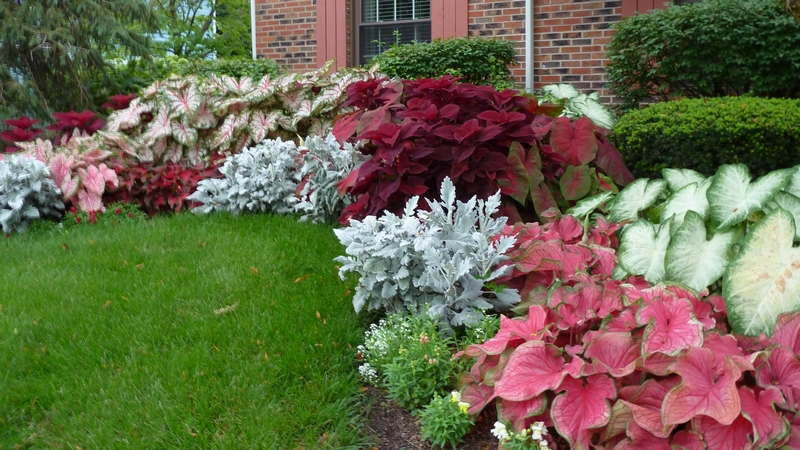 7 Fancy Ideas to Conceal Ugly-Looking Outdoor AC Unit - tall vegetation