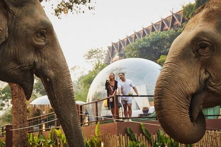 Jungle Bubbles – Discover the elephant outside your luxurious room