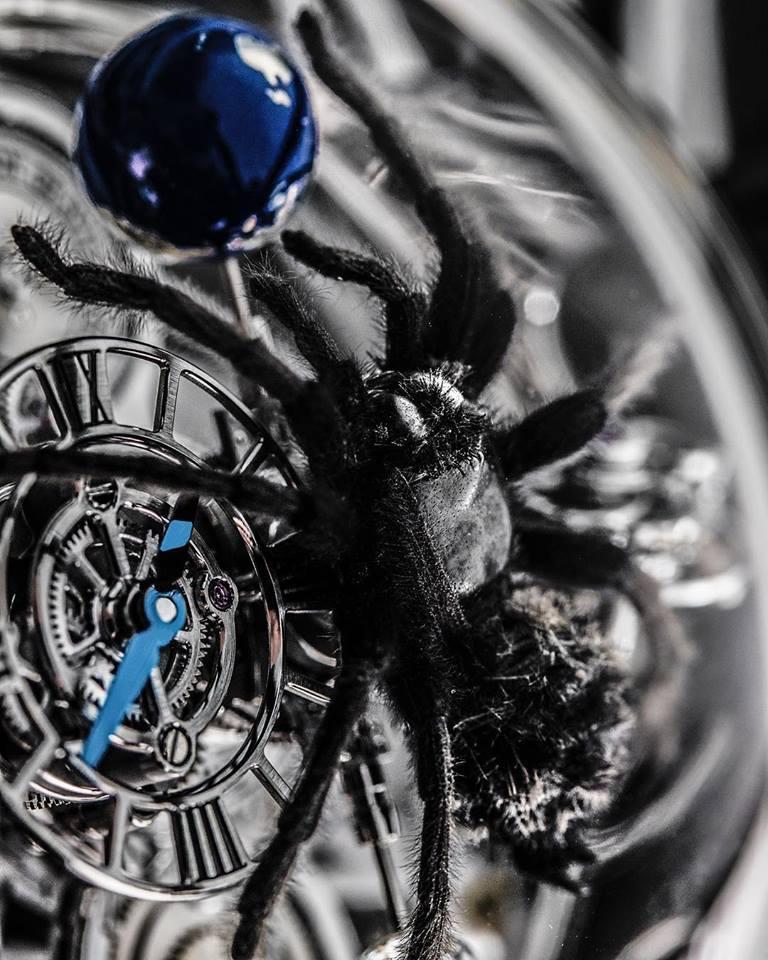 Astronomia Clarity Spider - Tarantula closeup