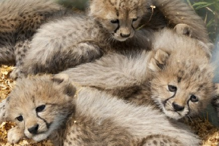 Wildlife crime study finds 33,000 items worth £7m for sale online