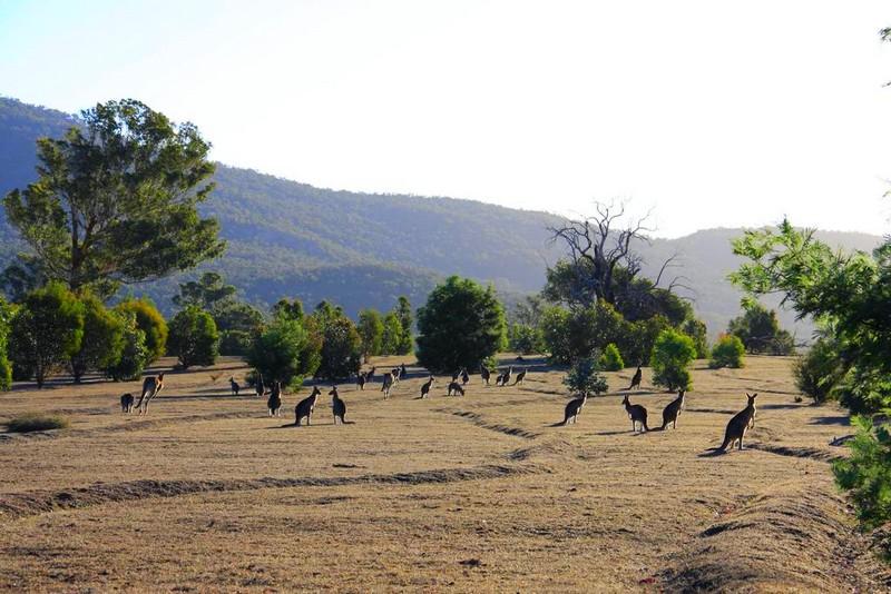 Boroka Downs Australia - panorama-