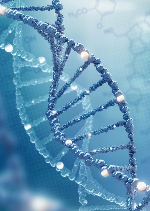 CHLI Genetics 2018