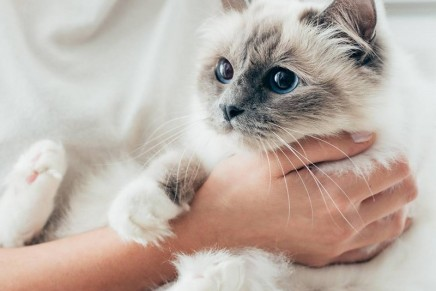 Three Luxurious Ways to Pamper Your Pet