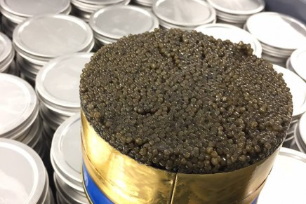 A taste of caviar … the sturgeon will see you now