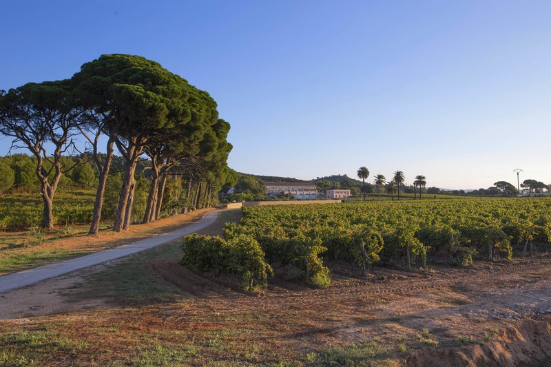 Chateau du Galoupet vineyard-