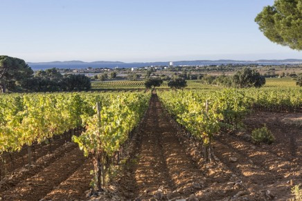 Moët Hennessy to add a Cru Classé de Provence to its portfolio, its first rosé wine