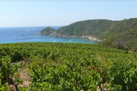 Provence wine route: top 10 guide