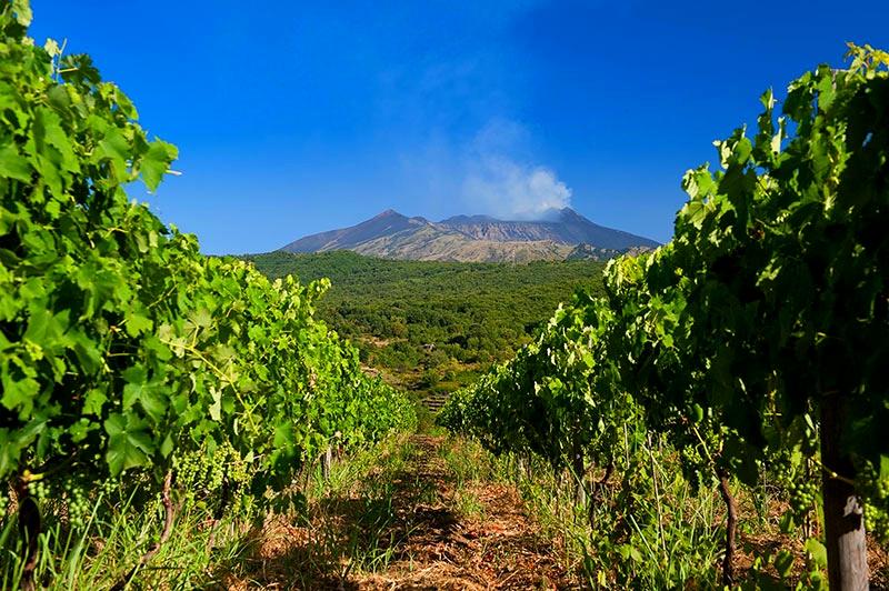 Etna vineyards