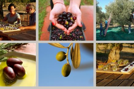 Trippin' out on olives: a food lover's guide to the Peloponnese