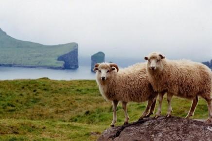 Craft in the Faroe Islands: wool is gold