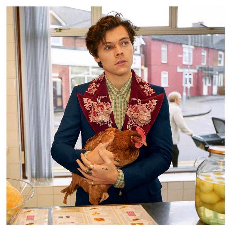 Harry Styles walks in a chippy the traditional British fish and chip shop—carrying a pet chicken
