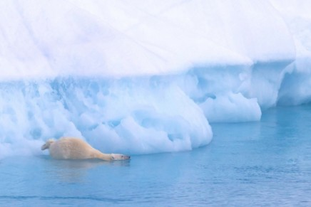 Green news roundup: Alan Rusbridger and Naomi Klein on climate change