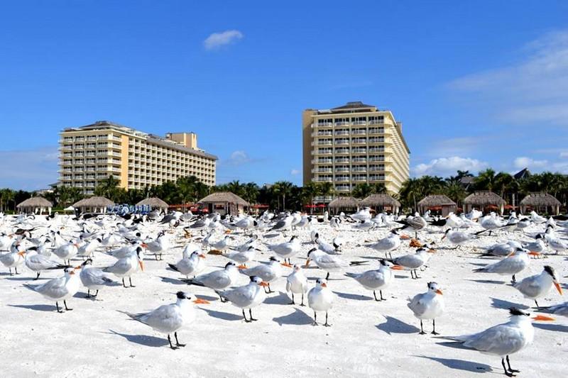 JW Marriott debuts on Marco Island Beach Resort-2017--