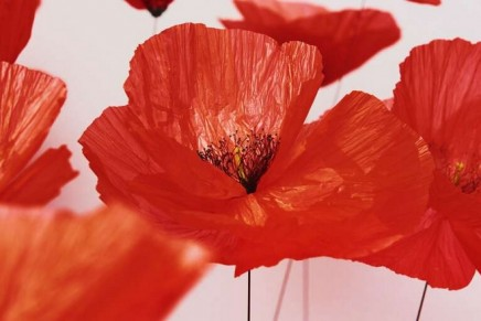 The Messenger Poppy: Kenzo Parfums x William Amor's upcycling art