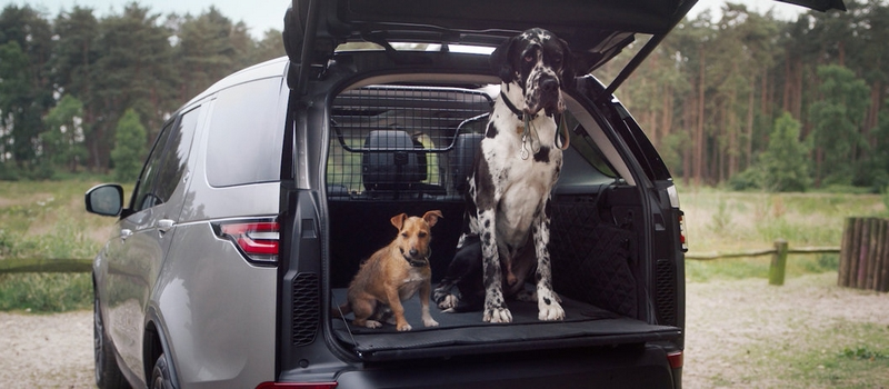 LAND ROVER'S FIVE-STAR DOG-FRIENDLY PET PACKS