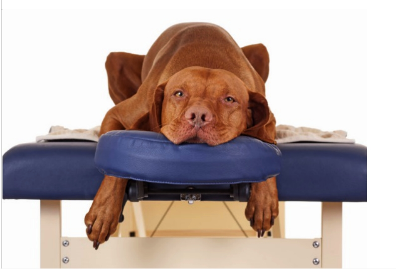 LUXURIOUS WAYS TO CELEBRATE YOU PET'S EXISTENCE - 1 Book A Massage Session