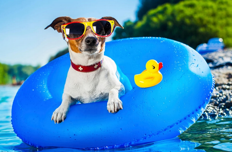 LUXURIOUS WAYS TO CELEBRATE YOU PET'S EXISTENCE - 4 Pool Time