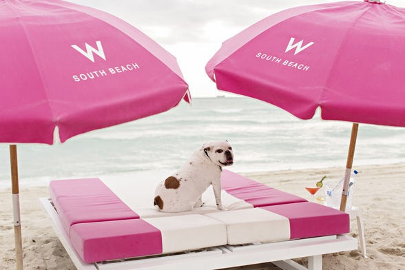 Miami Beach is a paradise for vacationers and their pets