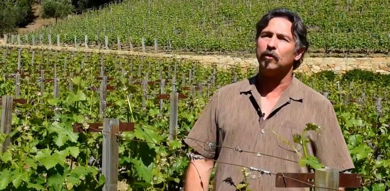 Moraga vineyard