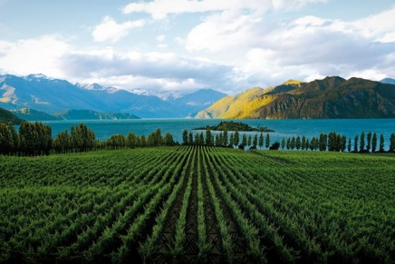 For wine producers, small is beautiful – but big is useful